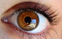Myris, reconnaissance iris