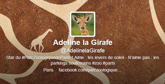 Une girafe sur Twitter